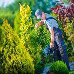 Firma ogrodnicza Olsztyn