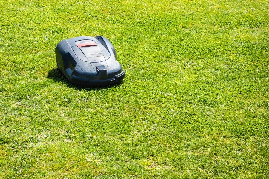 robot koszący na trawniku